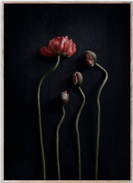 Bilde av Still Life 02 (Red Poppies) - 30 x 40 cm